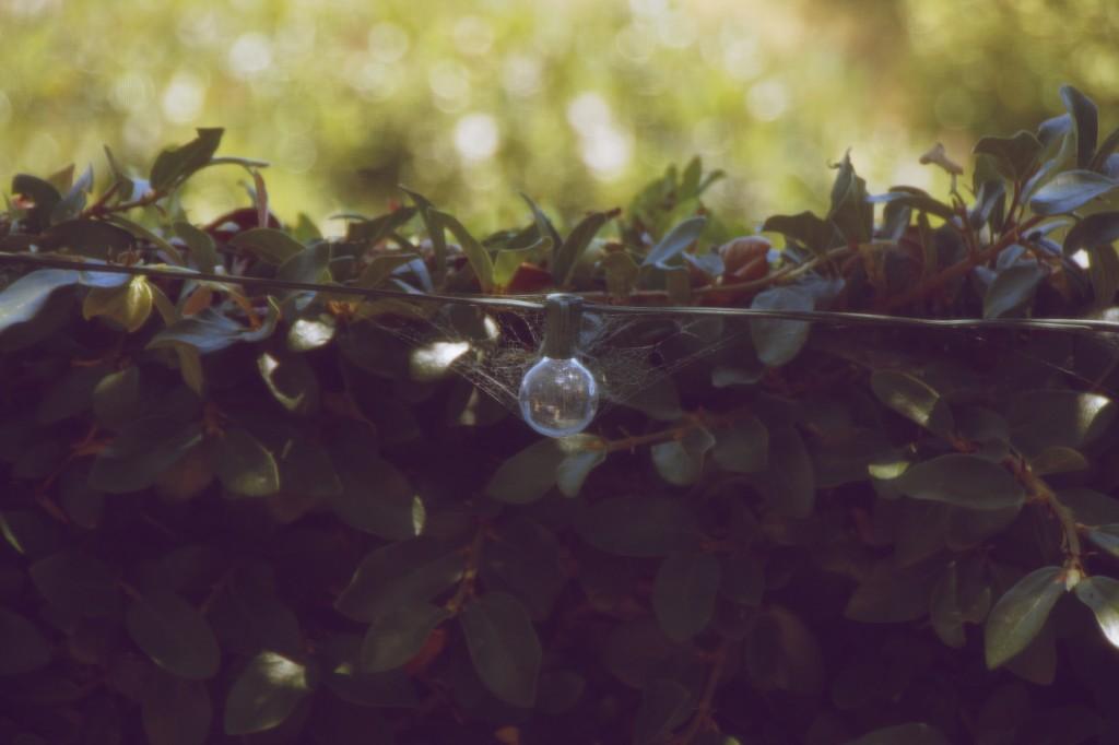 "<img alt=""Creeping Fig on Garden Wall"" />"