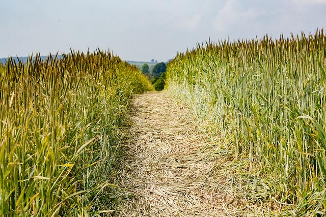 """<img alt=""""A Path through the Wheat""""/>"""