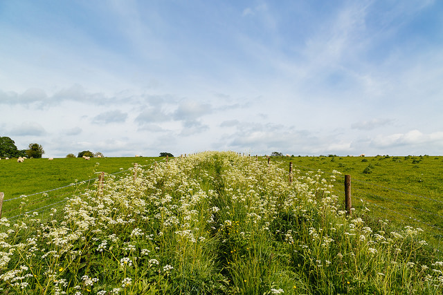"<alt img=""Path through Wildflowers""/>"