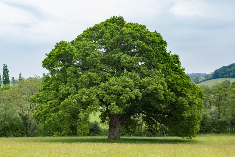 "<alt img=""Lone Tree ""/>"