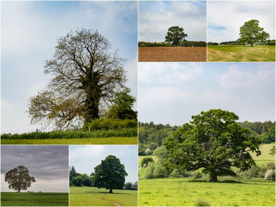 "<alt img=""Lone Trees ""/>"